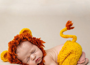 O pequeno simba que se torna o Rei Leão em pouco tempo lá em casa!