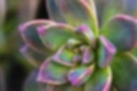 succulent 3.jpg