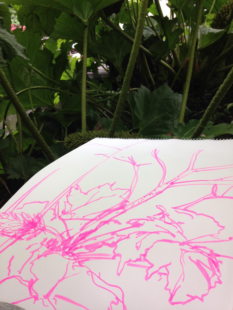 Pretty Monstrous, pen on paper, Hannah Peschar Sculpture Garden, as Artist in Residence, 2017