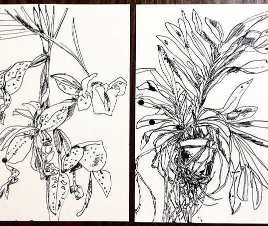 Darwin's Orchid, ink on paper, 2020.
