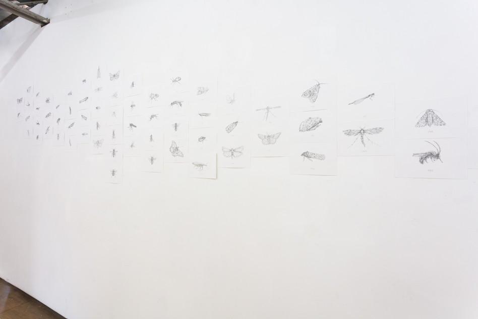 100 pollinator insect species lost in english habitats over the past 100 years, pencil on paper erased as performance, Goldsmiths MFA, 2019
