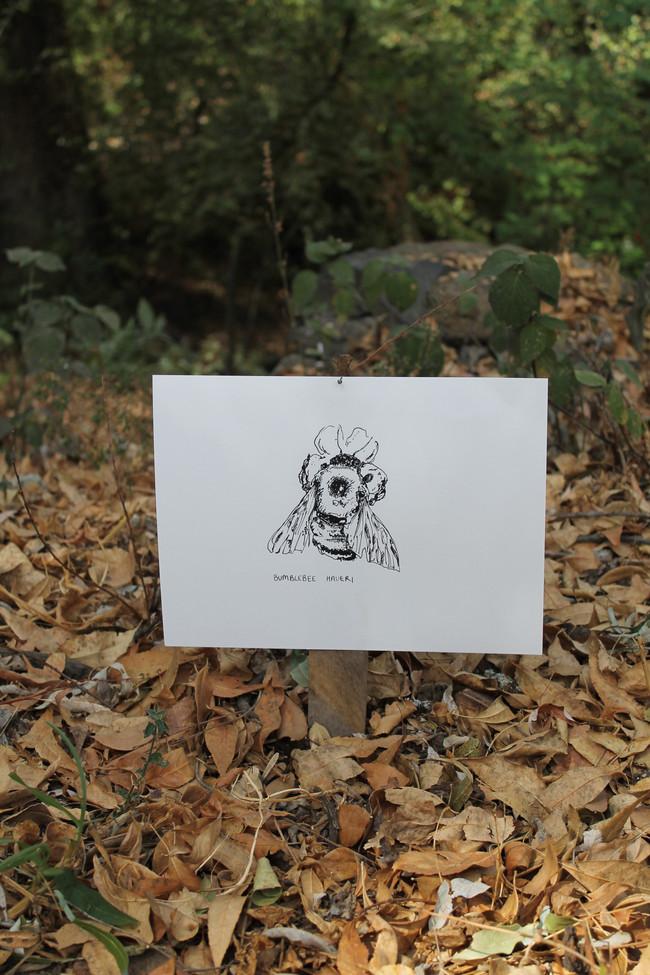 BUMBLEBEE HAUERI, ink on paper, 2021