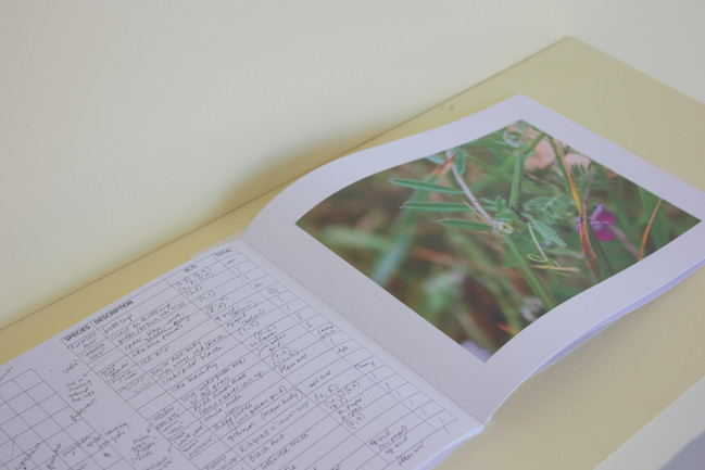 Notes from the Field, pencil on paper, printed publication, Quadrat grid, MFA Degree Show, Goldsmiths, 2019