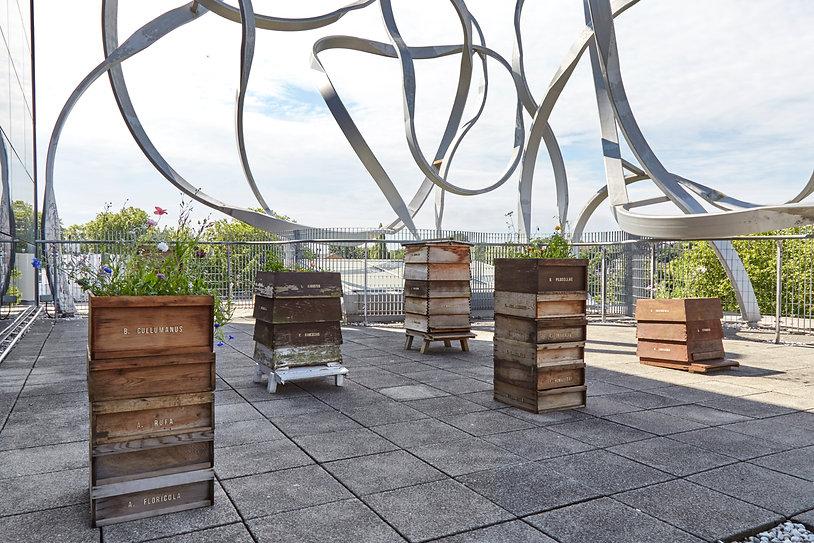 Memorial for Lost Species, 2019