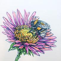 Bumblebee, For Renee, pen on paper, 2019.