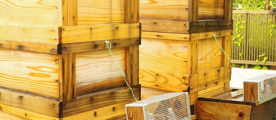 黄金の巣箱