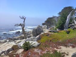 17 Mile Drive, Monterey, CA