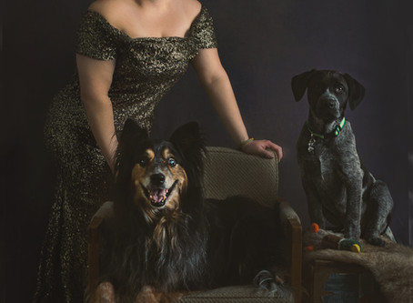 Now Offering Pet Sessions in the Studio!