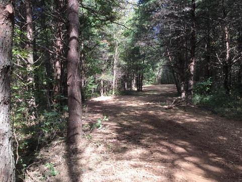 nature trail (1).JPG