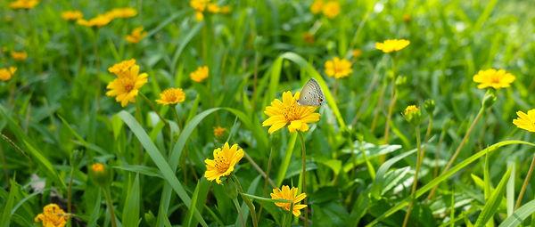 FUKUSHIMA PROJECT_02200615.jpg