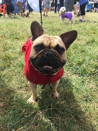 Red Weather-Protect Dog Jacket