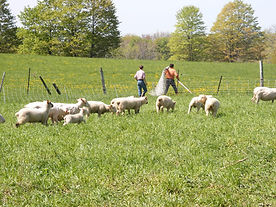 April's Farm Pic 025.jpg
