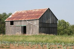 April's Farm Pic 007.jpg