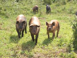 April's Farm Pic 059.jpg