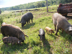April's Farm Pic 001.jpg