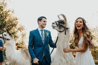 08-(Post)-Ceremony_Llamas!+CocktailHour-
