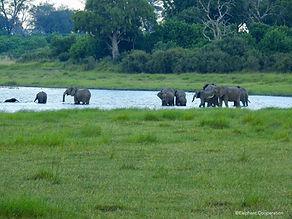 abu elephant herd in water.jpg