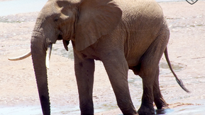 How An Elephant Is Seen…And Protected