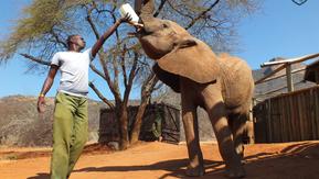 A Community & Family – Reteti Elephant Sanctuary