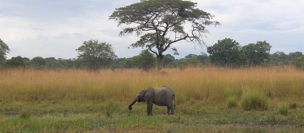 African Adventures – Part I.