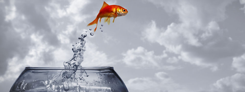 Goldfish jumping out of bowl.jpg