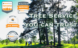 Professional Tree Service | Texas