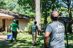 Trudeau Tree Service   East Texas