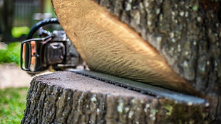 Professional Tree Service | Tree Removal