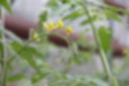 LHS Leaf.jpg