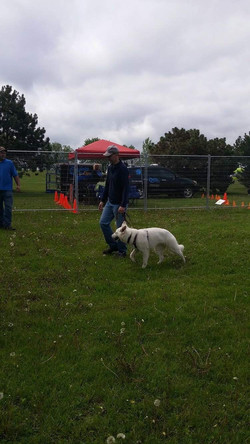 CKC Canine Good Neighbour (CGN) Test