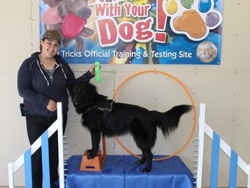 New Novice & Intermediate Trick Dog Titles!