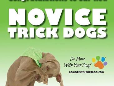 Novice Trick Dog Grads!