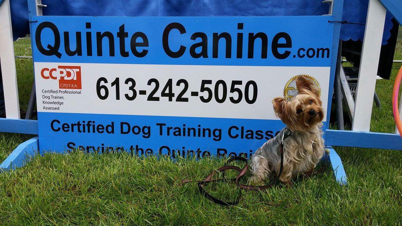 Quinte Canine CKC Canine Good Neighbour (CGN) Test