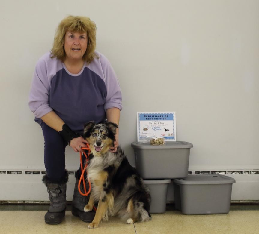 Dog training Belleville and trenton