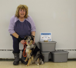 Dog training Belleville and trenton