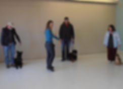 Dog Puppy Training Classes Belleville Trenton Ontario Train Trick Scenting Scent Detection Canine Quinte West