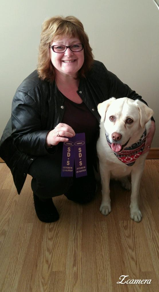 dog training trenton and belleville