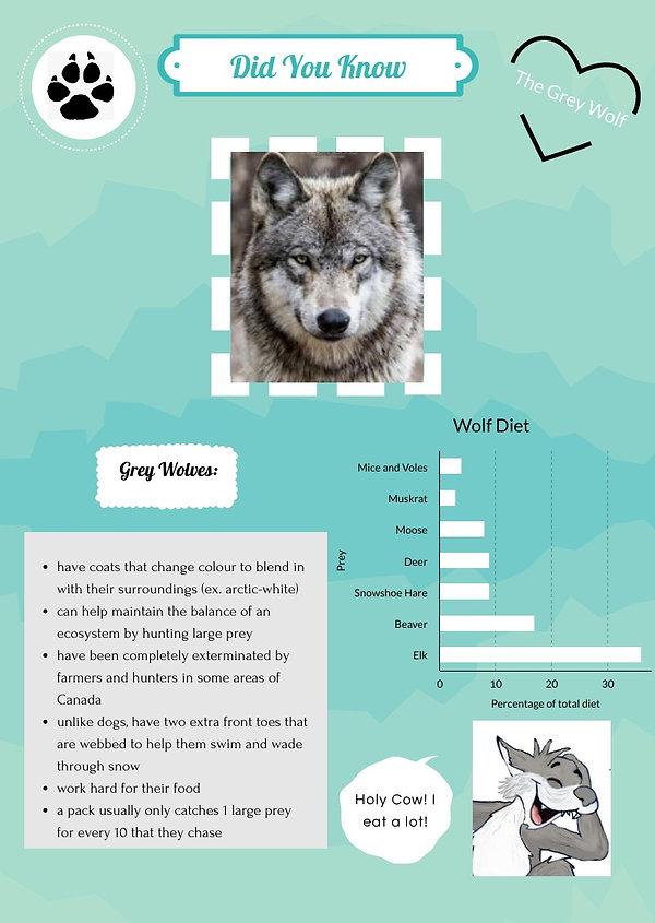 grey-wolf_48906937_edited.jpg