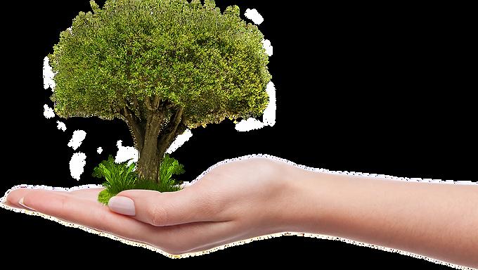 2 februari: 8.850 nieuwe bomen in Hoeselt