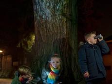 Sint-Truiden by Lights pakt uit met extra beleving
