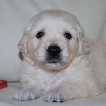 Maverick Puppy