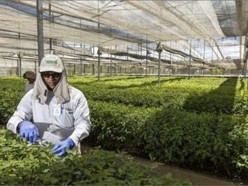 Tecnologia é desenvolvida para recomendação de plantio de eucalipto e aumento de produtividade