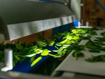 TOMRA Food Ajudando os processadores de vegetais a obter segurança alimentar e qualidade do produto