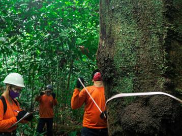 Dow e Natura colaboram em projeto para desenvolvimento social e econômico no Pará