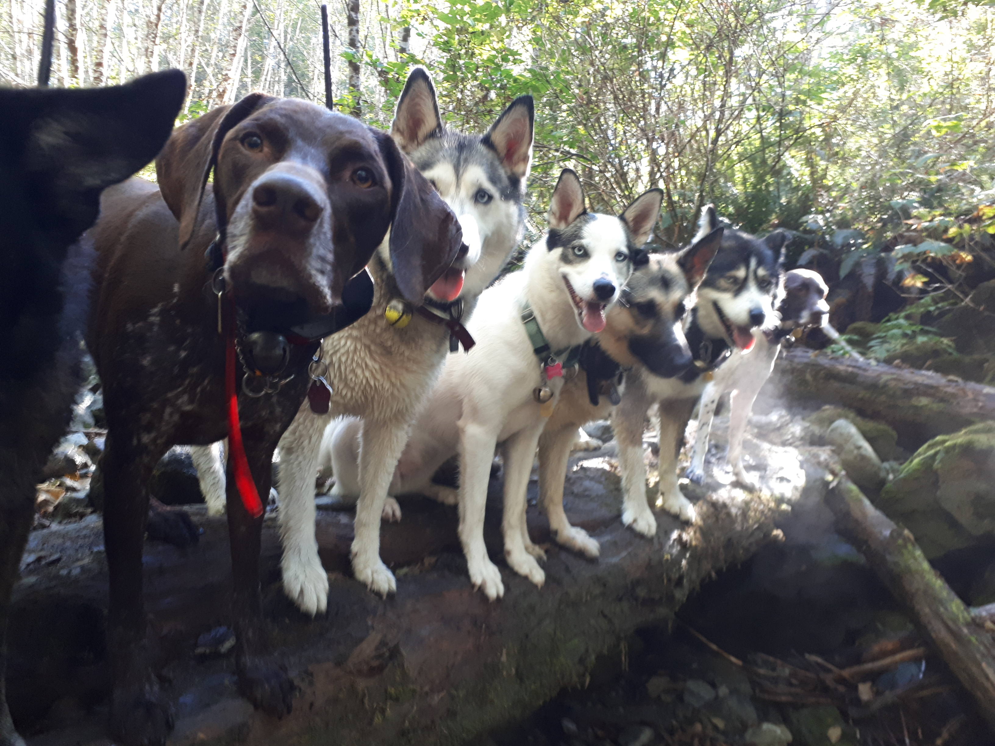 Ucluelet Dog Boarding, Training, and Walking