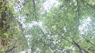 If a Tree Falls in the Woods, I'm just Glad I'm still Standing