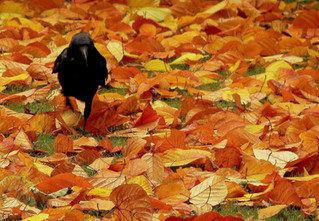 The Crow Totem: Adaptability, Reflection, and Magic
