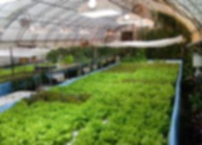 Farm Fresh Sustainable Greens, Microgreens, Vegetables, New Jersey Fresh Food, Aquaponics micro Farm