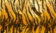 C5930-TIGER.jpg
