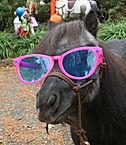 Team Velvet Sunglasses Annie.JPG